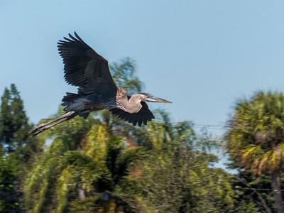 2014 Florida