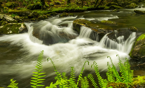 Tremont River, Great Smoky Mountains N.P.