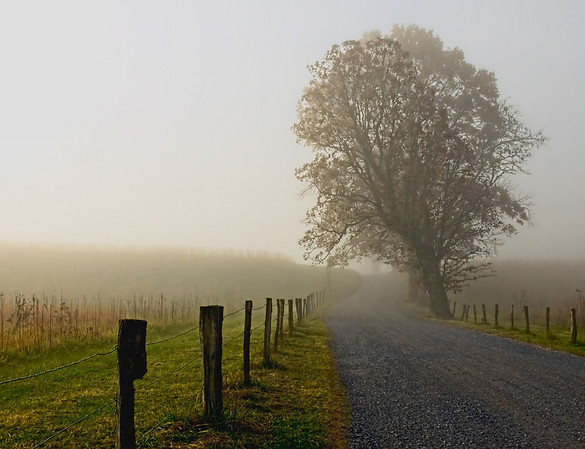 """Sunrise in the fog"", Hyatt Lane, Cades Cove, Great Smoky Mountains, TN."