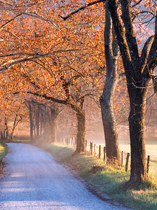 Late fall afternoon, Sparks Lane, Cades Cove, Great Smoky Mountains, TN.