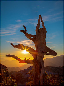 (dancing tree)