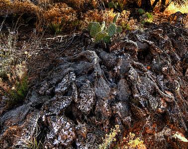 Cactus Falling: Into Ruin (cactus falling)