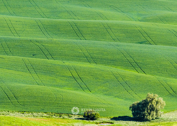 Rolling wheat fields of the Palouse