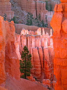 Bryce at Dawn
