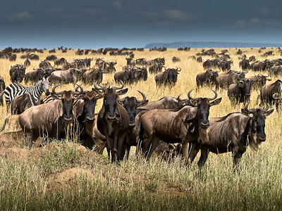 It's Gnus to Me
