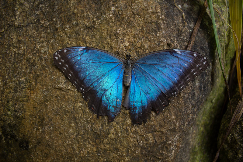 Elusive Blue
