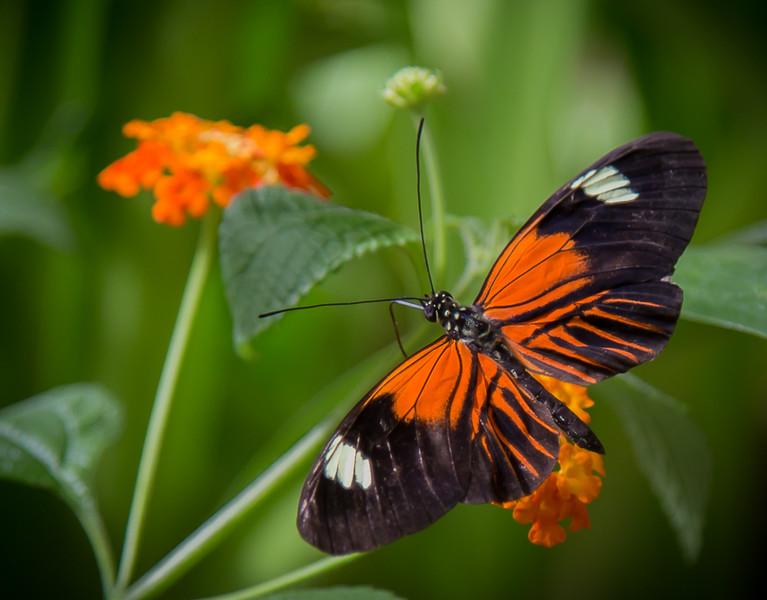 Butterly in the garden