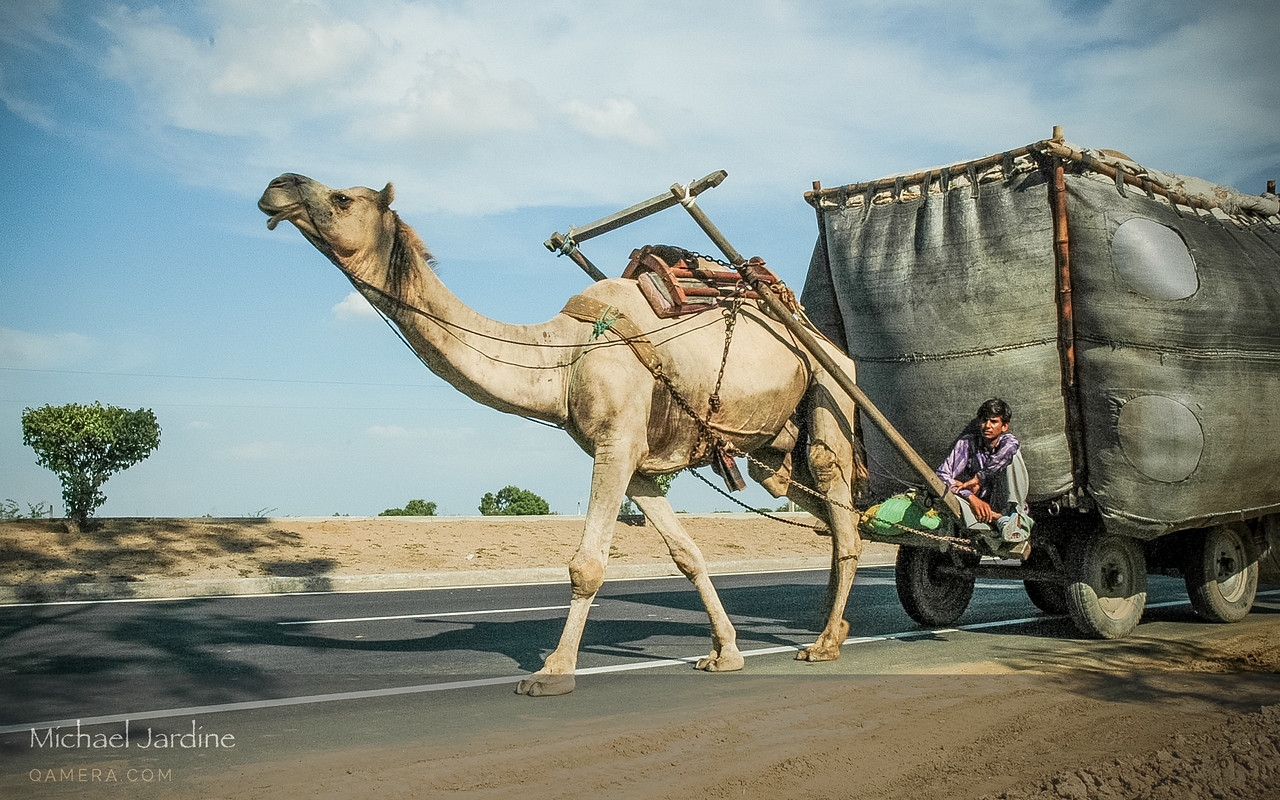 Camel power
