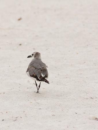 Little Beach Bird