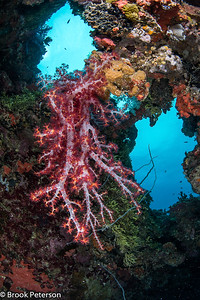 Soft Coral on a Shipwreck