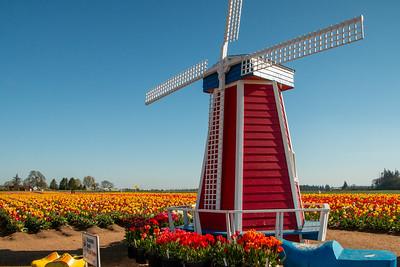 04_Windmill_Wooden Shoe Tulip Farm © June Russell-Chamberlin