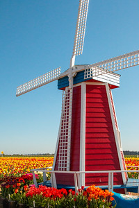 03_Windmill_Vertical_Wooden Shoe Tulip Farm © June Russell-Chamberlin