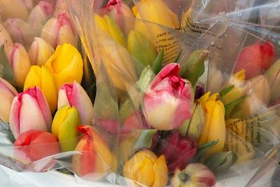 33_Cut tulips @ Wooden Shoe Tulip Farm © June Russell-Chamberlin