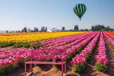 16_Tulip field with Balloon_Wooden Shoe Tulip Farm © June Russell-Chamberlin