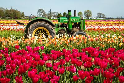07_Green tractor in field_Wooden Shoe Tulip Farm © June Russell-Chamberlin