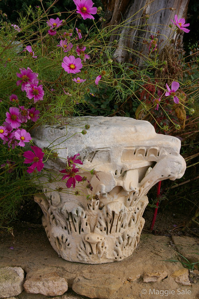 Flowers at Carthage