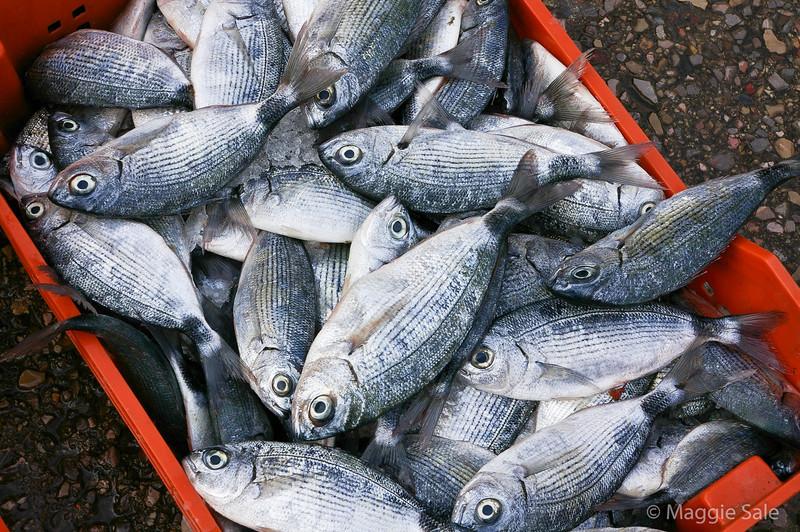 Fish market, Sousse