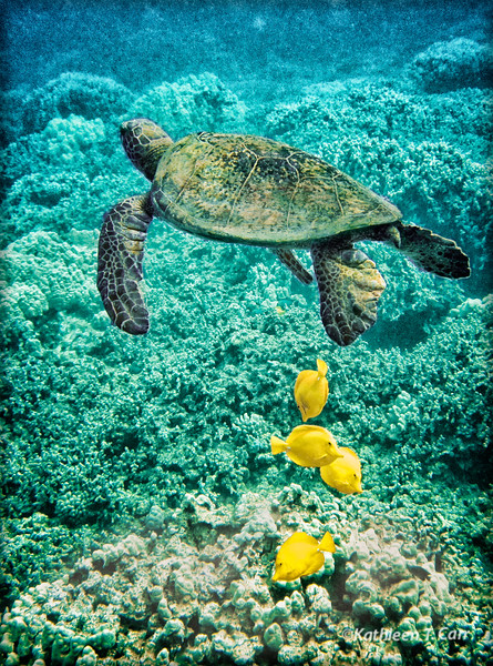 Turtle and Tangs
