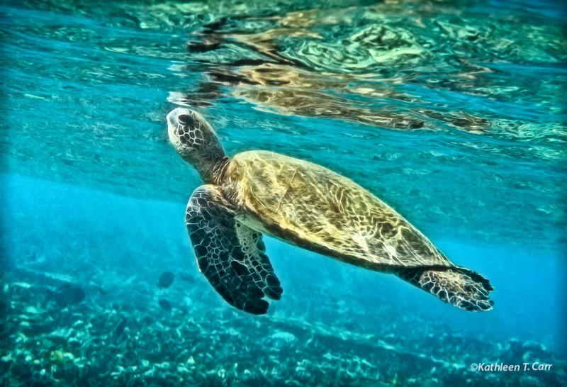 Turtle Surfacing