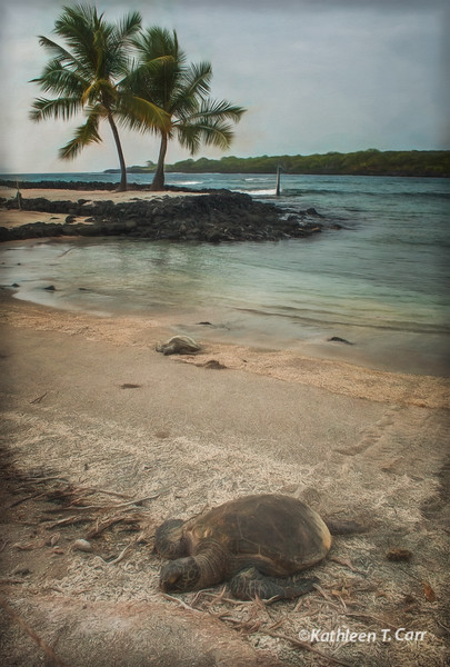 Turtle, Place of Refuge #9944