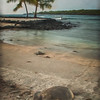 Turtle, Place of Refuge #9944