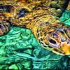 Turtle Closeup II