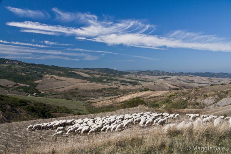 Hills near Radicofani