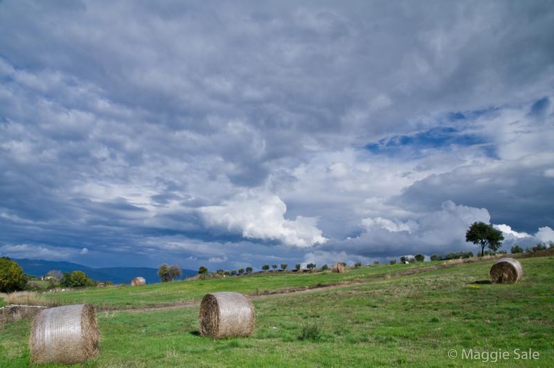 Hay near Cortona
