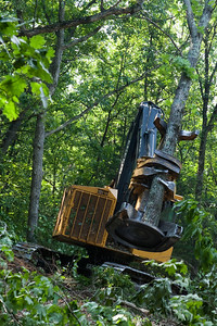 Tree removal in experimental glade, Tyson Research Center, Missouri