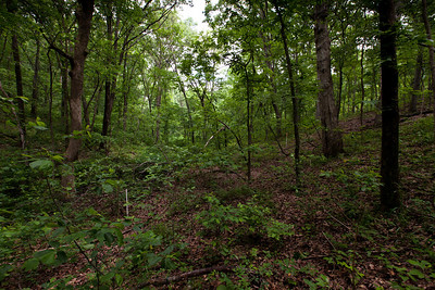 Valley, Tyson Forest Dynamics Plot