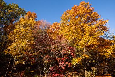 Autumn, Tyson Research Center