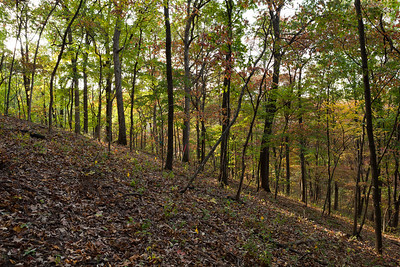 North-facing Slope, Tyson Forest Dynamics Plot, Fall 2010