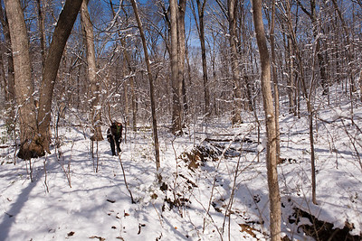 Valley, Tyson Forest Dynamics Plot, Winter 2011