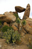 Prickly Pear Cactus - Yuccas - Balanced Rock - Grapevine Hills