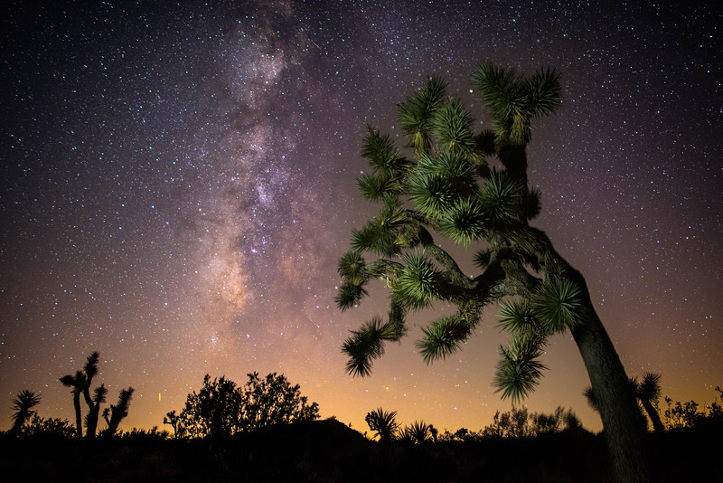 Reaching out for the stars in Joshua Tree National Park