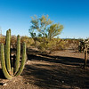 Organ Pipe Cactus National Park, Arizona.