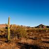 Organ Pipe Cactus National Park, Arizona.
