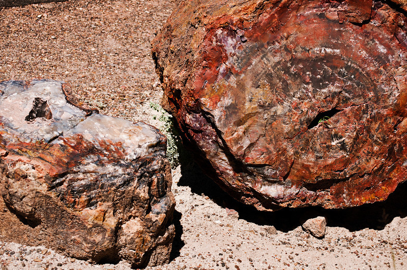 Petrified Forest National Park, Arizona. Petrified Forest National Park, Arizona.