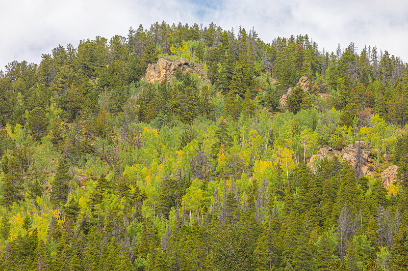 The aspen have just started to turn yellow in this section of the Rocky Mountains!  There are a few patches of yellow here and there, and more that look like they're just about ready to go!
