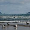 Seagulls on Arcadia Beach, Arcadia Beach State Recreation Site, Oregon.