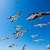 Seagulls at Seaside, Oregon.