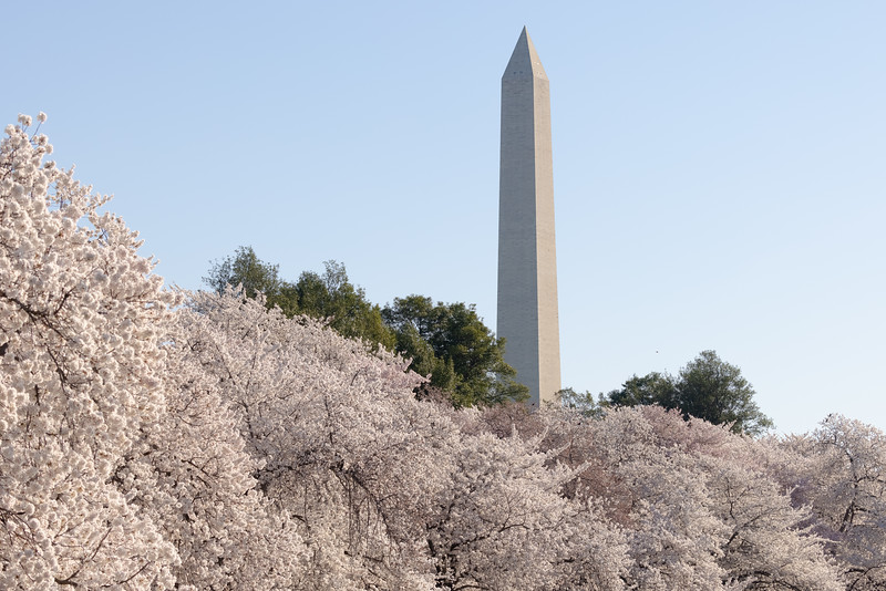 The Washington Monument is one of the most visible monuments in DC as it towers above everything else in the city.  Normally, we would venture to the cherry trees closer to its base but we did not today.  Instead, we enjoyed viewing the monument from the Tidal Basin.