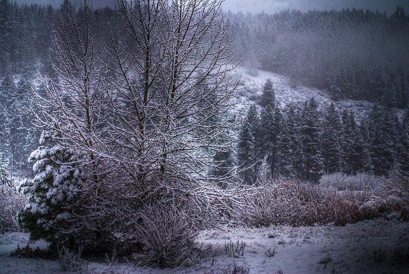 Winter trees in snow.