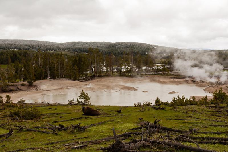 Mud Geyser (and a Bison)