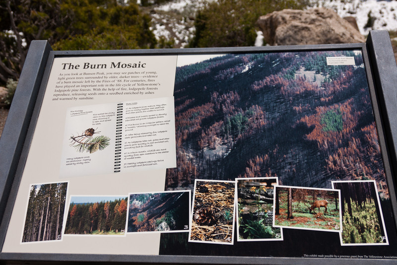 The Burn Mosaic