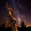 Ancient Bristlecone and Milky Way, Patriarch Grove, White Mountains, CA