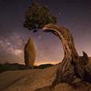 Pinon, Boulder and Milky Way, Joshua Tree National Park, CA