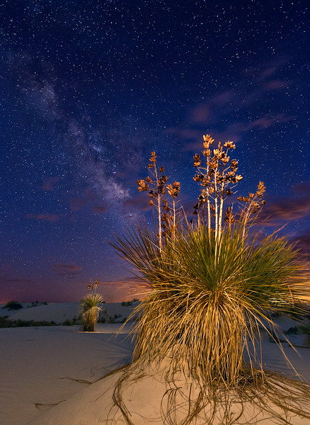 Yucca and Milky Way, White Sands National Monument, NM