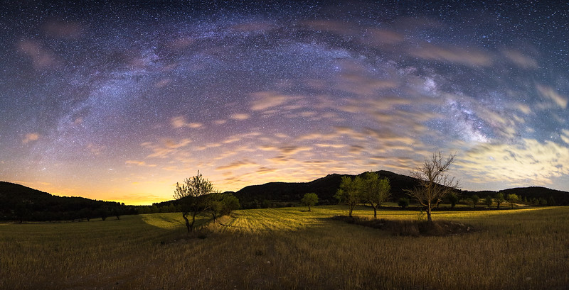 Barley and Olives under the dome of the Milky Way