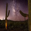 Three Saguaros and Milky Way, Saguaro National Park West, AZ